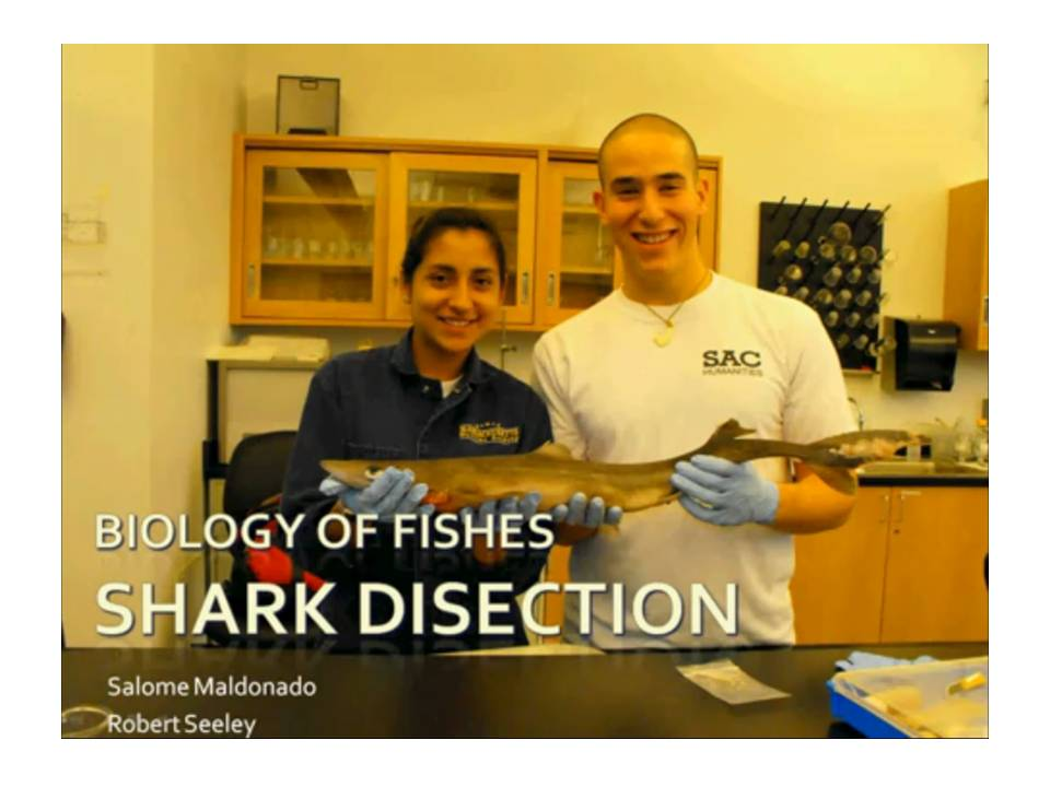 Fish Biology youtube videos