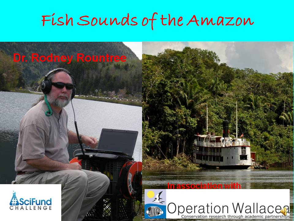 Fish Sounds of the Amazon