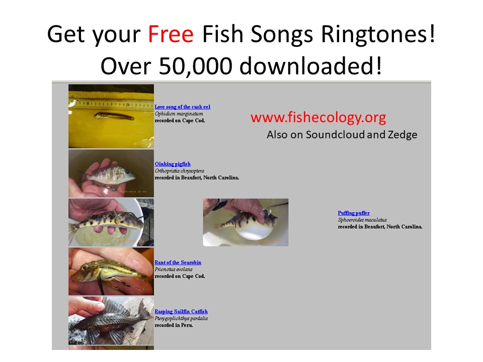 Download ringtones of fish sounds